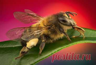 Гипнотизирующие макроснимки насекомых