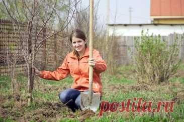 Посадка деревьев и кустарников: обзор публикаций на сайте 7 дач