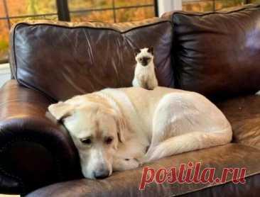 Трогательная история дружбы лабрадора и испуганного котенка растрогала пользователей сети