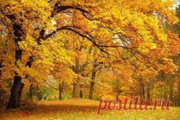 ღОсень ступила походкой вальяжно Смотрит на всех отрешенно она.  Листья летят, самолетом бумажным И холоднее на небе луна.     .