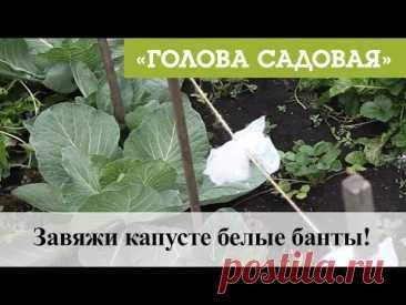 Голова садовая - Завяжи капусте белые банты!