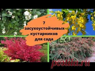 Засухоустойчивые неприхотливые кустарники для сада, которые практически не требуют ухода