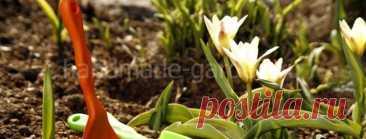 Дела, которые нужно сделать в саду, огороде и цветнике в марте
