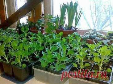 ОЧЕНЬ ПРОСТОЙ СПОСОБ ВЫРАСТИТЬ КРАСИВУЮ ПЕТУНИЮ У многих садоводов не получается вырастить петунию из семян. Я каждый год рассаду петунии выращиваю сама. И поверьте, её вырастить очень легко. Только есть несколько секретов, которыми я с удовольствием поделюсь.Раскладываю торфотаблетки в пластиковый контейнер. И заливаю теплой водой с...
