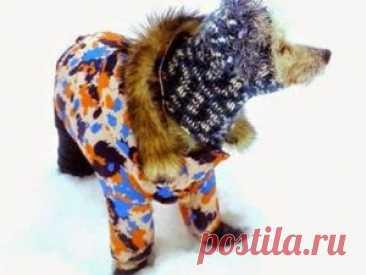 Мастер-класс смотреть онлайн: Шьем зимний костюм для собаки. Часть 2. Куртка   Журнал Ярмарки Мастеров Продолжаем пошив нашего наряда. Приступаем к курточке. Много читала, изучала, пробовала. Наткнулась на такую очень полезную картинку, которая и направила меня в нужном направлении