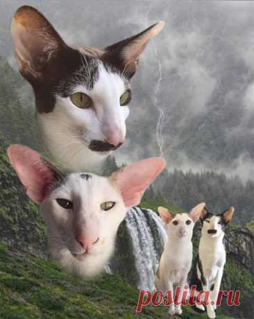 Wild Masterpieces: гламурные фотографии животных