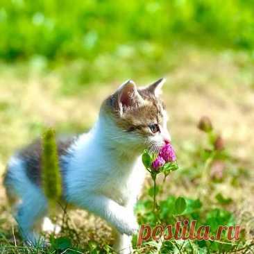 Давайте знакомиться! Мы пять милых котят, которым нет ещё и двух месяцев, ищем добрых и заботливых хозяев!  Мы очень шкодные, игривые и дружные малыши!  Несмотря на то, что мы братья и сёстры, мы отличаемся друг от друга окрасом, повадками и темпераментом!  Если решите забрать нас к себе (БЕСПЛАТНО!), то, мы уверены, вы не пожалеете! Подпишитесь на наш аккаунт и узнаете много интересных и смешных историй из нашей жизни!  #котятабесплатноалматы #котятабесплатно #котятадаром...