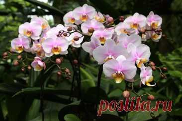 Перекись водорода — лучшее удобрение для орхидей | Цветы в квартире и на даче – от Радзевской Виктории | Яндекс Дзен