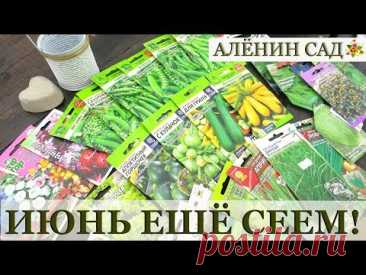 Что можно посеять в июне / Какие цветы и овощи посеять в июне