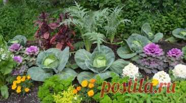 Эти овощи жить друг без друга не могут, только рядом! Такое соседство принесет…