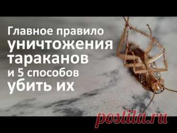 5 способов уничтожить тараканов и одно главное правило такого уничтожения