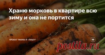 Храню морковь в квартире всю зиму и она не портится