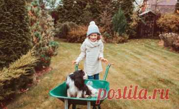Что делать на даче в ноябре: план работ в саду и огороде   Новости (Огород.ru)