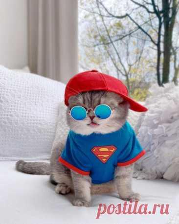Бродячий кот нашёл новый дом и стал Instagram-знаменитостью