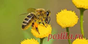 Двухсот или двухста? Раз и навсегда запоминаем это правило на пчёлах | Языковедьма | Яндекс Дзен