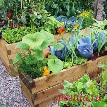 Creative ways to grow vegetables and fruits in the garden: 30 super inspiration ideas | My desired home