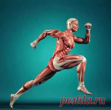 7 советов доктора Бубновского, которые помогут вернуть здоровье - Будь в форме! - медиаплатформа МирТесен