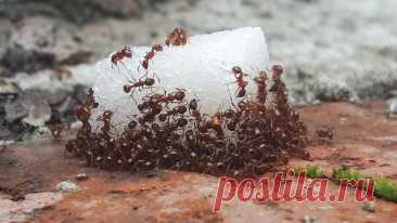 Секрет, благодаря которому муравьи и пауки обходят дом стороной Секрет, благодаря которому муравьи и пауки обходят дом стороной Избавиться от насекомых...