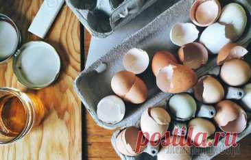 Как сделать удобрение из яичной скорлупы и правильно его применять У хорошего хозяина ничто не пропадает зря, в особенности у дачника или садовода. Многие отходы с кухни можно успешно использовать на участке, в том числе и яичную скорлупу. Она способна заменить покуп...