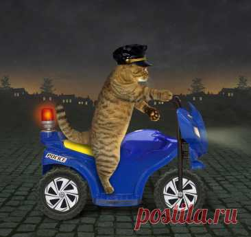 Кошичкина полиция | Лолкот.Ру