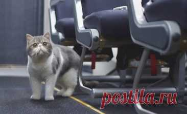 """Home / Twitter   Российская авиакомпания """"ЮТэйр"""" разрешила перевозить кошек и собак на пассажирских креслах, сообщает пресс-служба перевозчика."""