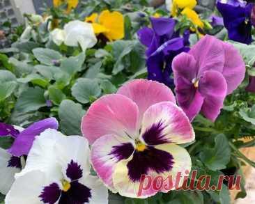 Растения, которые стоит посадить в саду весной: затмят своим цветением даже тюльпаны | ЭКОсад для всех | Яндекс Дзен