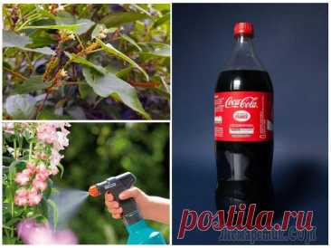 Кока-кола в саду и огороде: неожиданные способы применения напитка Оказывается, кока-колу на даче можно использовать не только для пикников. Предлагаем несколько рецептов, которые позволят вам защитить растения от вредителей и повысить урожайность. Кока-кола – один и...