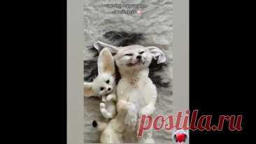 Любимая игрушка!)))))