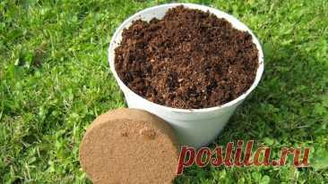 Как улучшить грунт под рассаду, чтобы росло абсолютно все | Рекомендательная система Пульс Mail.ru