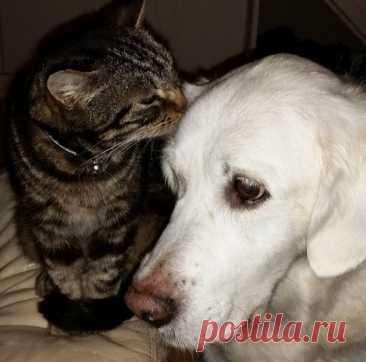 Если собака гоняется за кошками – Блог. Run, пользователь Марина Николаева | Группы Мой Мир