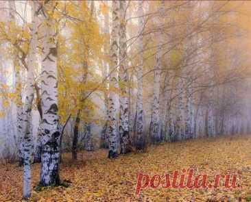 ღБерезки золото листвы Полощут трепетно в озерах Небес глубоких. Синевы Ещё достаточно в просторах Осенней выси. Облака Её разбавили немного, Летят, летят издалека, Торя прозрачную дорогу. Октябрь достал из-под полы Для лета бабьего наряды, Они по своему милы И тешат любопытных взгляды. Тепло последнее в году Собою радует прохожих,