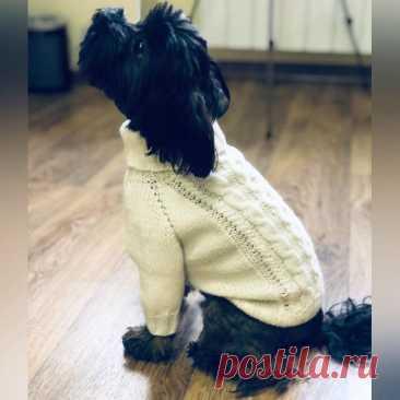Мастер-класс по вязанию свитера-комбинезона для маленькой собачки (Вязание спицами) – Журнал Вдохновение Рукодельницы