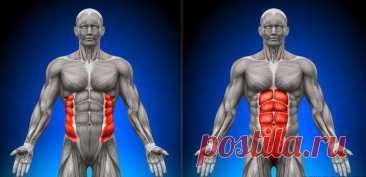 Cross muscle — a belt of our stability
