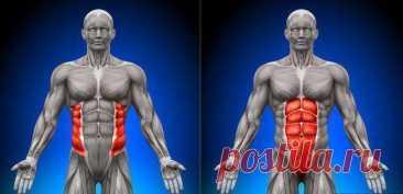 Поперечная мышца — пояс нашей стабильности
