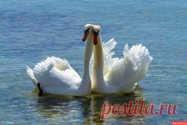 Фото: Ещё раз про любовь.... Фотограф Татьяна Соловей. Фото животных - Фотосайт Расфокус.ру
