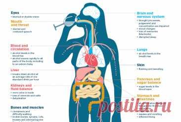 Что алкоголь делает с организмом после 40 лет