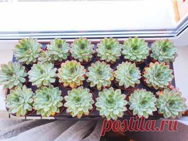 Как заработать на комнатных растениях? 5 актуальных и доступных идей | Антон - цветочник | Яндекс Дзен