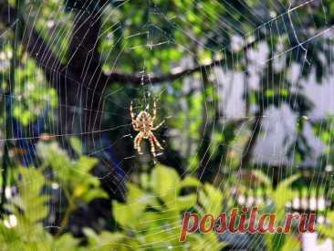 Если укусил паук - первая помощь и что нельзя делать » Женский Мир