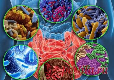 Микроорганизмы в кишечнике могут заставлять нас есть сладкое. Как их поменять на другие, хорошие | Будни Анны | Яндекс Дзен