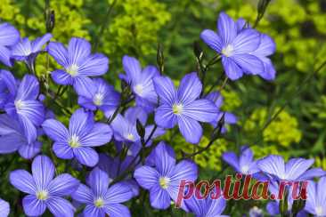 Волшебные семена для здоровья, молодости и красоты! — ХОЗЯЮШКА24