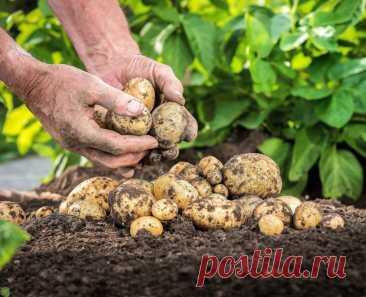 Когда за картофель с собственного участка действительно будет грозить штраф В последние годы, огороды возвращают себе популярность, а за 2020, если верить результатам исследований крупных агентств, произошел ...