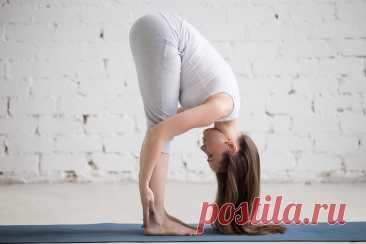 Наклон вперед - сильное упражнение, считает нейрофизиолог Джон Арден | Wolf Fit 🐺 | Яндекс Дзен