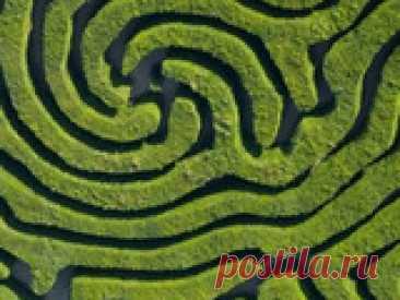 Живые изгороди в саду. Агротехника Правильное размещение растений на участке, своевременный уход, формирование изгороди, поможет создать уникальную живую «конструкцию». Разберем подробнее агротехнические мероприятия.