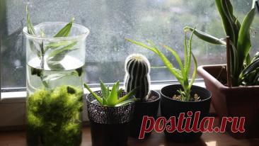 Продлеваем лето: эксперт рассказал о секретах ухода за комнатными растениями зимой