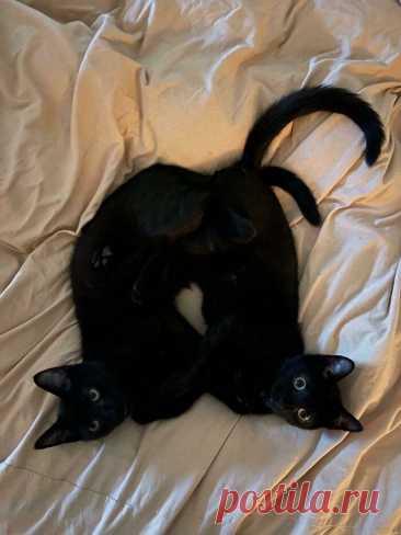 25 наглядных причин, почему две кошки лучше, чем одна