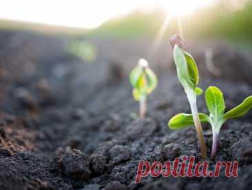3 простых способа выращивания рассады | Идеальный огород | Яндекс Дзен