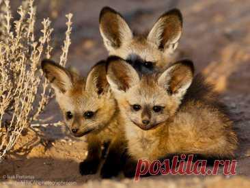 Удивительные малыши животных редких видов