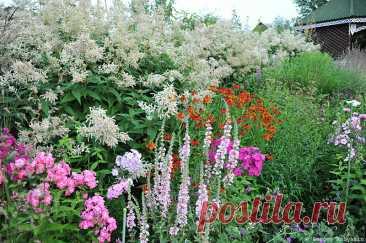 4 многолетника-великана для вашего сада