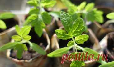 Домашний огород на подоконнике: как сделать своими руками и что можно выращивать