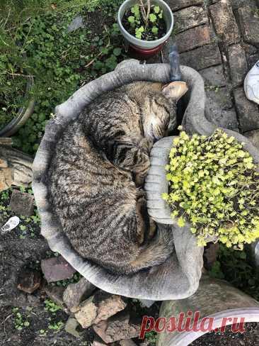"""16 невероятно """"жидких"""" и податливых котиков, которые показывают чудеса гибкости Пролезет голова – пролезет и вся кошка. Эта старая примета раньше позволяла обустраивать интерьер так, чтобы оградить хвостатым доступ куда не положено. А сегодня с её помощью котики нас веселят, пок..."""